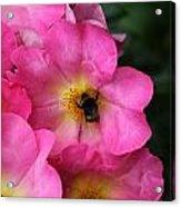 Floral 0017 Acrylic Print