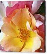 Floral 20 Acrylic Print