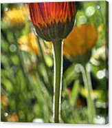 Floral Torch Acrylic Print