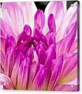 Flower 11 Acrylic Print