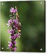 Flower Dance Acrylic Print