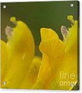 Flower Acrylic Print by Odon Czintos