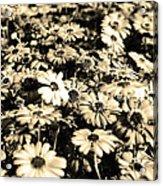 Flowers In Sepia Tone Acrylic Print