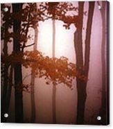 Foggy Misty Trees Acrylic Print