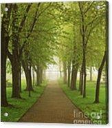 Foggy Park Acrylic Print