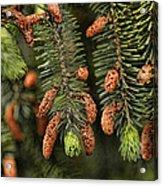 Forest Treasures Acrylic Print by Bonnie Bruno