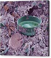 Fossilised Diatoms, Sem Acrylic Print