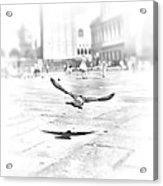 Freedom Acrylic Print by Marianna Mills