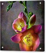 Freesia Acrylic Print