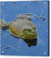 Frog In Pond Acrylic Print