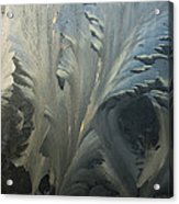Frost Crystal Patterns On Glass, Ross Acrylic Print