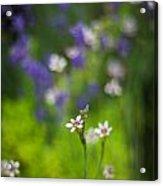 Garden Of Bliss Acrylic Print