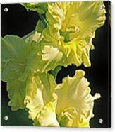 Gladiolus (gladiolus X Gandavensis) Acrylic Print