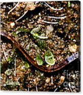 Glowworm Acrylic Print