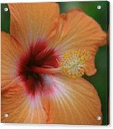 Gods Garden Acrylic Print