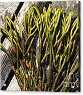 Green Fleece Seaweed Acrylic Print