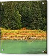Grizzly Bear Fishing In Chilkoot River Acrylic Print