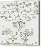 Guggenheim Family Tree Acrylic Print by Science Source