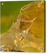 Halicid Bee 6 Acrylic Print