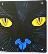 Here Kitty Acrylic Print