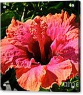 Hibiscus Blossom Acrylic Print