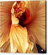 Hibiscus Interior Acrylic Print
