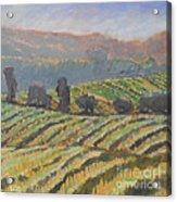 Hillside Vineyard Acrylic Print by Kip Decker