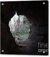 Hollow Log Acrylic Print