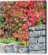 Hot Autumn Leaves 02 Acrylic Print
