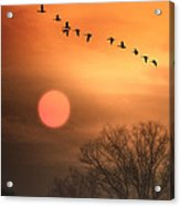 Hot Summer Flight Acrylic Print by Tom York Images