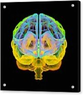 Human Brain, Artwork Acrylic Print
