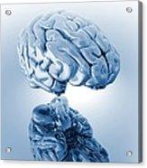 Human Brain, Artwork Acrylic Print by Victor Habbick Visions