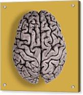Human Brain Acrylic Print