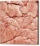 Human Skin, Sem Acrylic Print