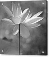 I Love Lotus Acrylic Print