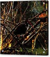 Ibis At Dusk Acrylic Print