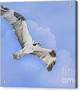 In The Clouds Acrylic Print