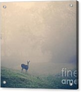 In The Quiet Acrylic Print