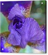 Iris Square Acrylic Print