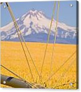 Irrigation Pipe In Wheat Field With Acrylic Print