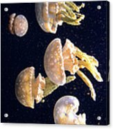 Jellyfish 3 Acrylic Print