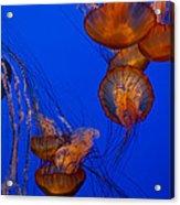 Jellyfish Dance Acrylic Print