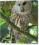 Keeping An Eye Out Acrylic Print