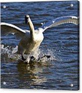 Lake Logan Landing Acrylic Print