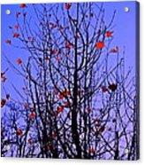 Leaves 3 Acrylic Print