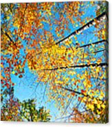 Looking Up At All The Colors Acrylic Print