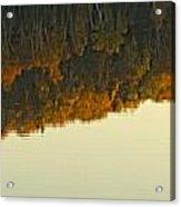 Loon In Opeongo Lake With Reflection Acrylic Print by Robert Postma