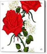 Love Is Like A Red Red Rose Acrylic Print