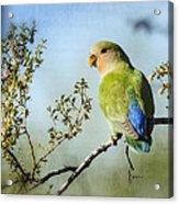 Lovebird  Acrylic Print