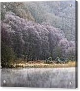Lower Lake, Glendalough, County Acrylic Print